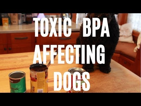 Toxic BPA Affecting Dogs
