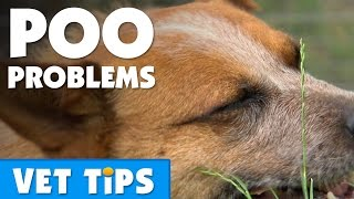 How To Help Your Dog Overcome Constipation Bondi Vet