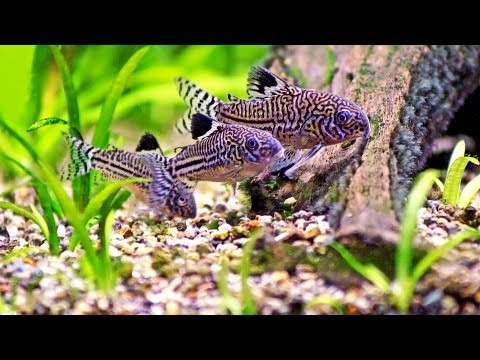 Clean Fish Tank without Removing Fish | Aquarium Care