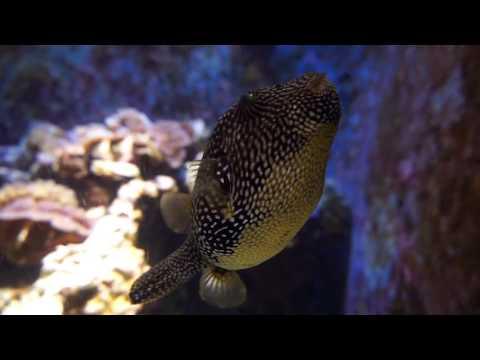 Churaumi Aquarium In Okinawa Japan!