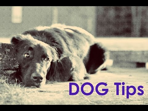 Dog Training Tips- Don't Let Your Dog Run Over To Other Dogs!