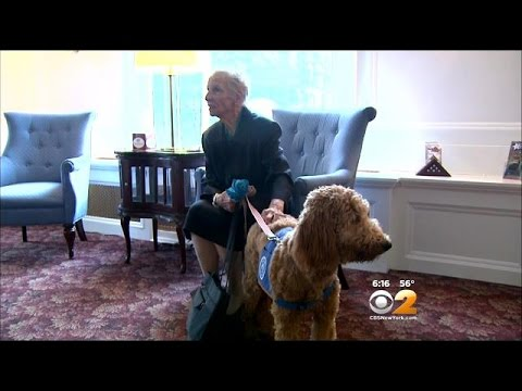 Therapy Dog Getting Rave Reviews At White Plains Funeral Home