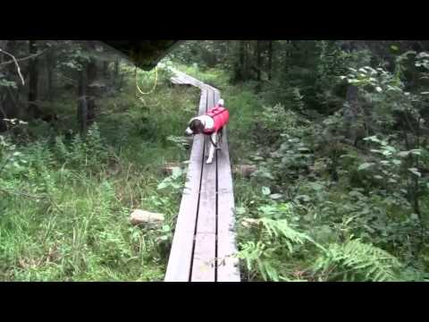 Staying the Course - (4 of 11) Eight Day Solo Canoe Trip with my Dog