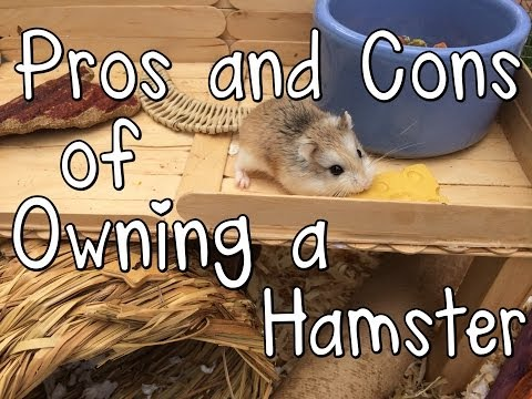 Pros and Cons of Owning a Hamster