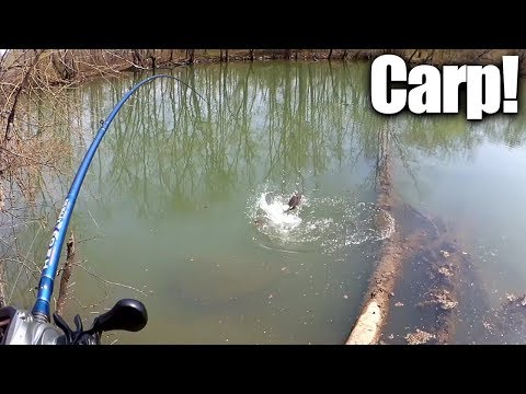 Sight Fishing For Carp With Bread - How To Catch Carp The Easy Way