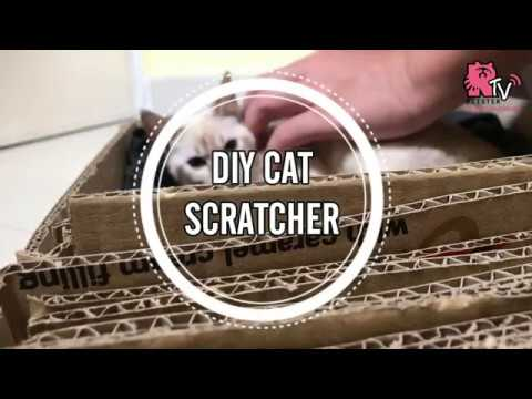 DIY Cat Scratcher (3 items only!)