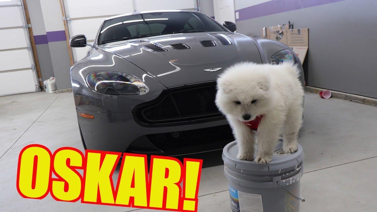 Meet my new Puppy and the Aston Martin V12 Vantage