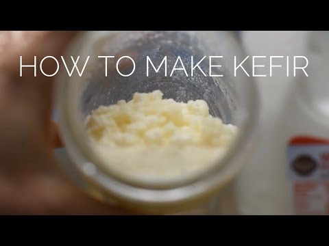 How to Make Kefir for Your Dog || DIY Supplements
