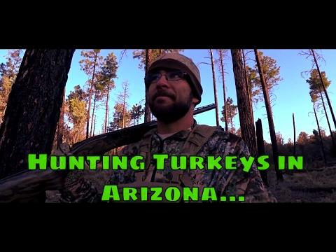 Hunting Turkeys In Arizona...
