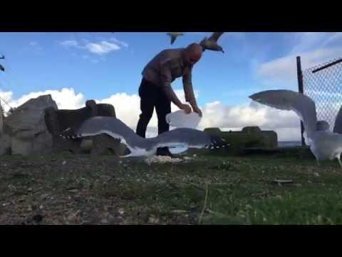 Feeding the ocean birds sigals