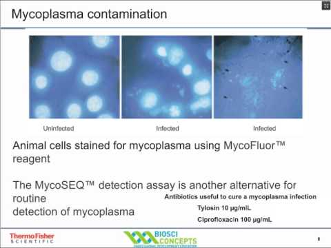 Cell Culture Contamination and Prevention