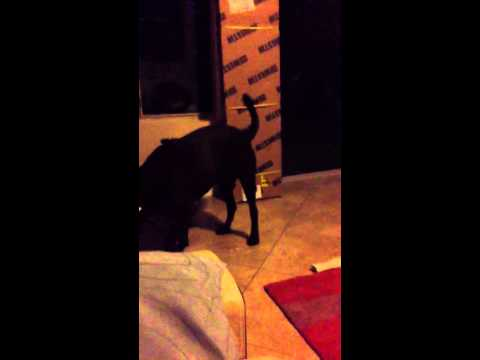 Dog gets excited when you clap for him