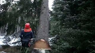Chainsaw Husqvarna 572 XP Garden and Forest Original YouTube