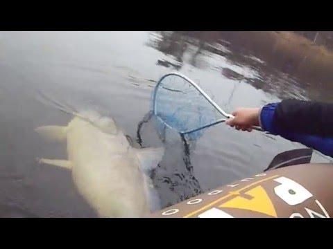 Huge Wisconsin River Buffalo Carp In a Tiny Boat LyubakaVideo