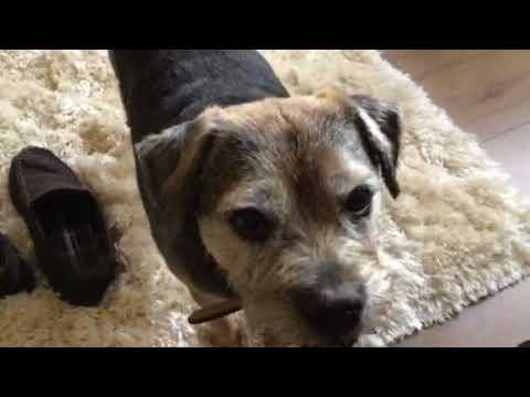 Alfie enjoying the new rug