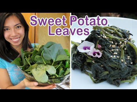 Harvesting & Cooking Sweet Potato Leaves