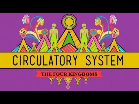 Circulatory & Respiratory Systems - CrashCourse Biology #27