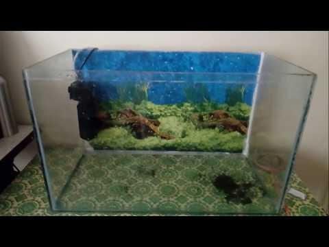 Aquarium fishtank Cleaning in Hindi
