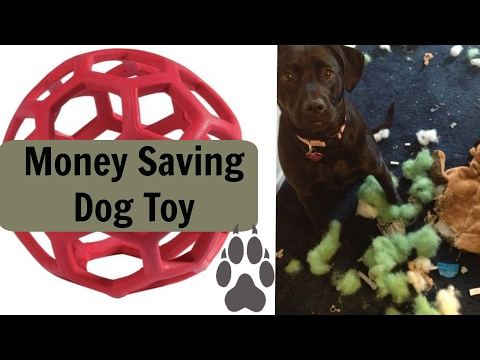Money Saving Dog Toy! $$$  | Plus less fluff to clean up | @TopDogTx