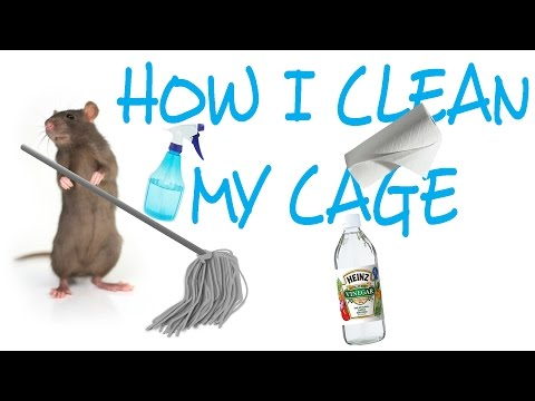 How I Clean My Rat Cage | Rattiepedia: Episode 18