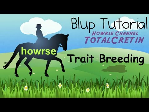 Trait Breeding - Howrse Blup Tutorial