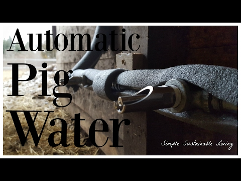 Ultimate Pig Watering System - Automatic and no freezing