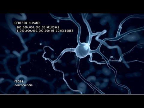 Redes 160: Cómo se conectan las neuronas - neurociencia