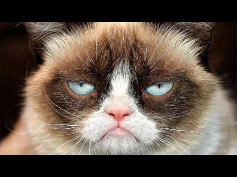 How to build Grumpy Cat in Minecraft
