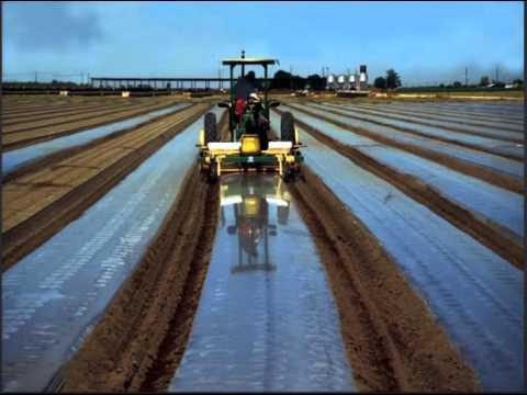 Advances in Biosolarization Technology to Improve Soil Health and Organic Control of Soilborne Pests
