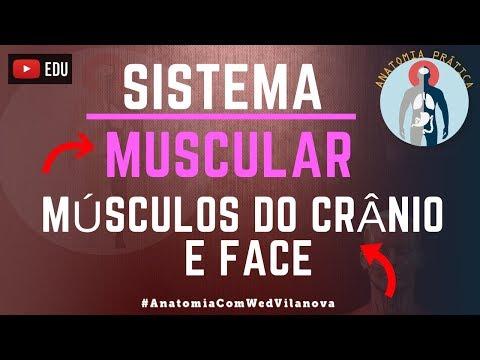 Músculos da Cabeça: Músculos do Crânio e Face | Sistema Muscular - Anatomia Prática - VideoAula