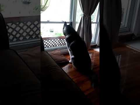 Dog barks at window