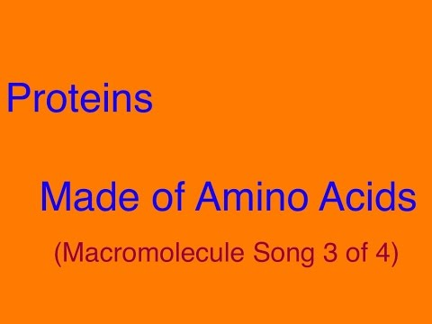 Proteins (Made of Amino Acids) - Macromolecule Song 3 of 4