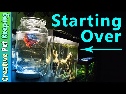 How to clean a 5 gallon BETTA FISH tank | #BettaFishCare