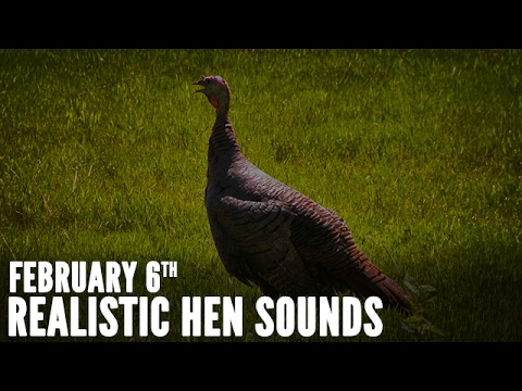 Turkey Calling Tips - How to Sound Like a Live Hen | Spring Thunder