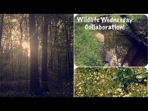 Wildlife Wednesday Collab|Wildlife in our area|Favorite Memories!