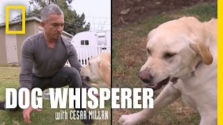 Showdown with Holly | Dog Whisperer