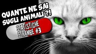 20 STATISTICHE STRAMBE che non sai sugli ANIMALI