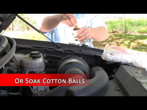 How to keep mice out of your car engine