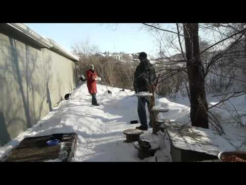 Feral Cats In Winter