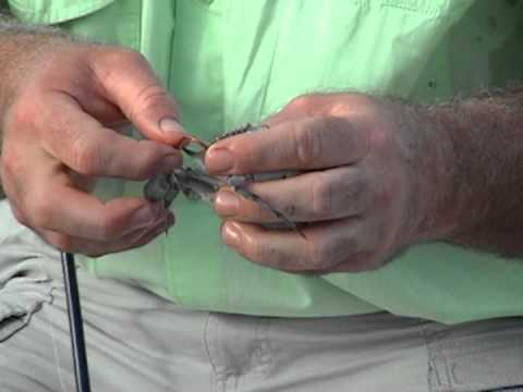 How To Rig A Live Blue Crab For Bait: Bob McNally