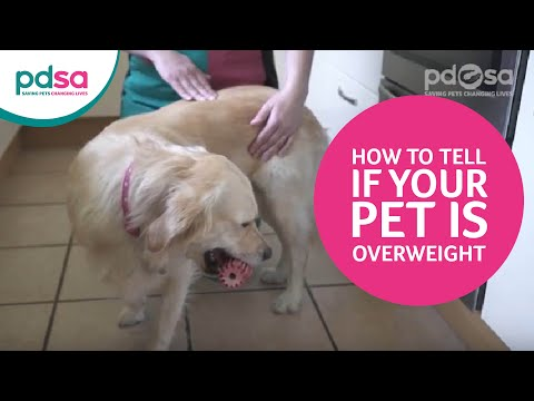 How to tell if your pet is overweight