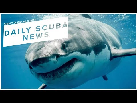 Daily Scuba News - Is A Great White Shark In Great Yarmouth?