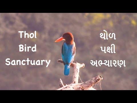 Xxx Mp4 Thol Wildlife Sanctuary A Morning Place Near To Ahmedabad 3gp Sex