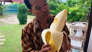 Fruits King - The Largest Fruits in The World