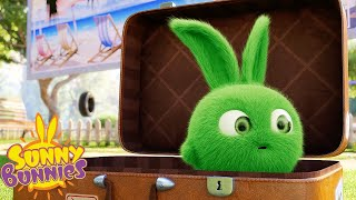 SUNNY BUNNIES - Time for a Vacation   Season 3   Cartoons for Children