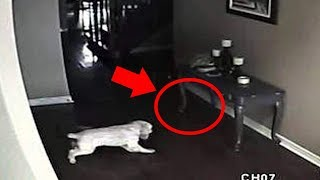 5 Dogs That Saw Something Their Owners Couldn