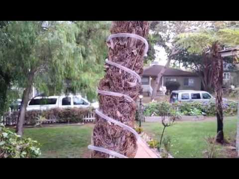 Solar Rope Lighting Backyard Ideas on solar garden ideas, solar backyard lighting products, solar backyard decorating, concrete backyard lighting ideas,