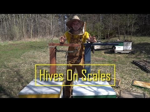 Scale Hives - keeping track of the weight of my hives