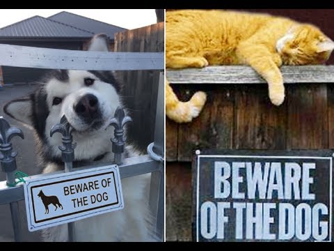 CUTE & FUNNY BEWARE OF DOG SIGNS YOU NEED TO SEE. CUTENESS OVERLOAD