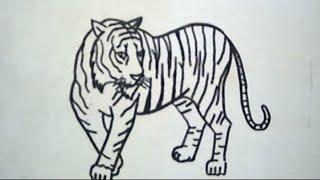 87 Gambar Vignet Harimau